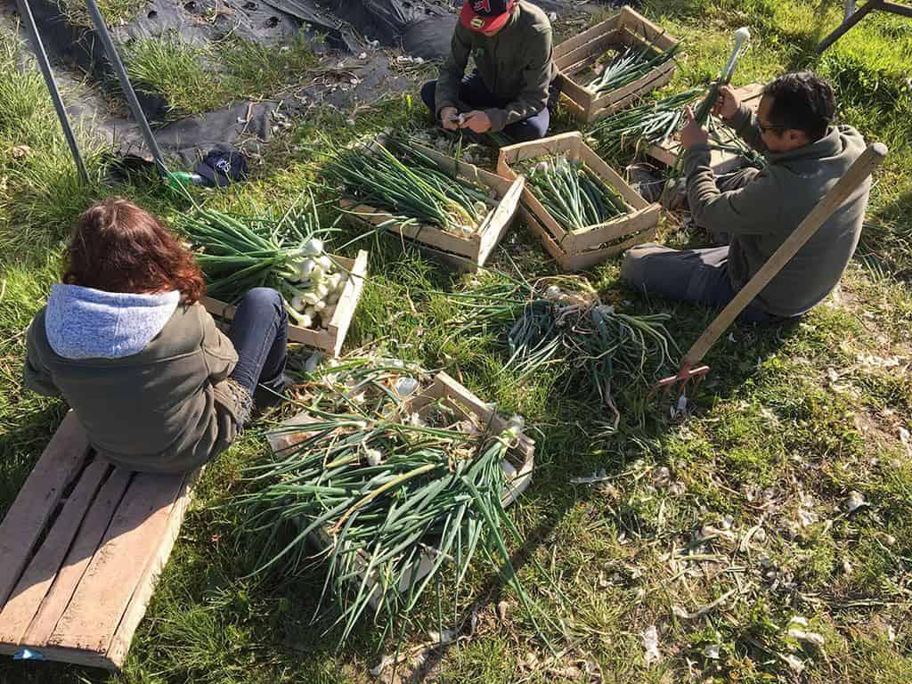 Association Les Amis du Jardin : Projet social